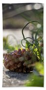 Pinecones And Wild Onions  Beach Towel