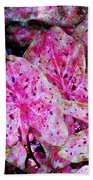 Pink Caladium Beach Towel