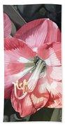Pink Amaryllis Beach Towel