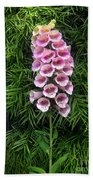 Pink Bell Flowers. Foxglove 02 Beach Towel
