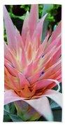Pink Bromeliad Beach Towel