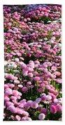 Pink Button Pom Flowers Beach Towel