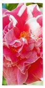 Pink Camellia At Pilgrim Place In Claremont-california  Beach Towel