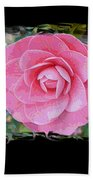 Pink Camellias With Fence And Framing Beach Towel