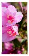 Pink Cardinal Bush Flowers Beach Towel