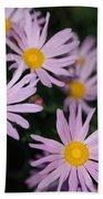 Pink Clara Curtis Daisy Chrysanthemum Beach Towel
