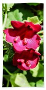 Pink Creeping Gloxinia Beach Towel