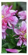 Pink Dahlia Flowers Beach Towel