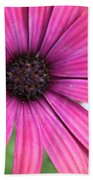 Pink Daisy Beach Towel