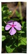 Pink Downy Phlox Wildflower Beach Towel