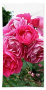 Pink Floribunda Roses Beach Towel