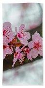 Pink Flowering Tree - Crabapple With Drops Beach Towel