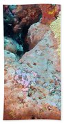 Pink Frogfish Beach Towel