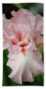 Pink Iris Study 15 Beach Towel