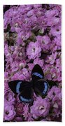 Pink Kalanchoe And Black Butterfly Beach Towel