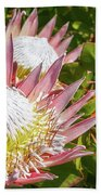 Pink King Protea Flowers Beach Sheet