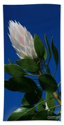 Pink King Protea Kula Maui Hawaii Beach Towel