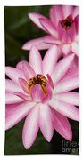 Pink Lotus Blossoms Beach Towel