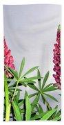 Pink Lupins Beach Towel