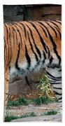 Pink Nosed Tiger Beach Towel