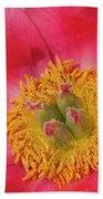 Pink Peony Flower Fine Art  Beach Towel
