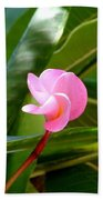 Pink Plumeria In Bloom Beach Towel