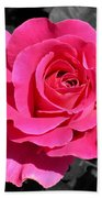 Perfect Pink Rose Beach Towel
