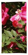 Pink Rose Of Sharon Blooms      Spring     Indiana Beach Towel