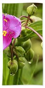 Pink Spiderwort Drip Drops Beach Towel
