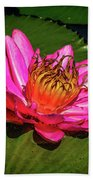 Pink Summer Water Lily Beach Towel