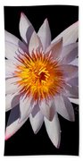 Pink Tipped Water Lily Transparent Beach Towel