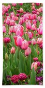 Pink Tulips At Floriade In Canberra, Australia Beach Towel