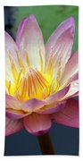 Pink Water Lily Beach Sheet