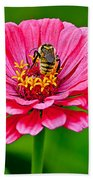Pink Zinnia Bee Beach Towel