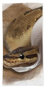 Pinstripe Pied Royal Python 01 Beach Towel
