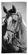 Pinto Pony Portrait Black And White Beach Towel