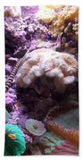 Pipe Fish And Sea Anemone  Beach Towel