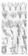 Plant Sexual Systems, Carl Linnaeus Beach Towel