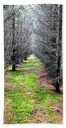Planted Spruce Forest Beach Towel