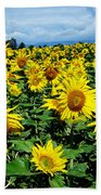 Pleasant Warmth Beach Towel