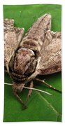 Plebeian Sphinx Moth Beach Towel