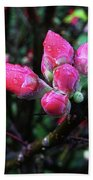 Plum Blossom 1 Beach Towel
