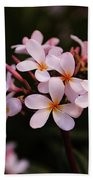 Plumeria Flowers Beach Towel