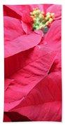 Poinsettias #1 Beach Towel