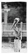 Point Clear Alabama Brown Pelican - Bw Beach Towel