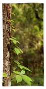 Poison Ivy Climbing Oak Tree Trunk Beach Towel