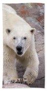 Polar Bear Prowl  Beach Towel