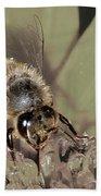 Pollinating Bee Beach Sheet