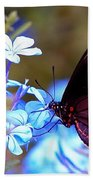 Polydamas Swallowtail Butterfly Beach Towel