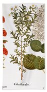 Pomegranate, 1613 Beach Towel